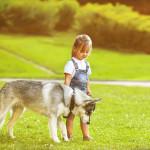 mascotas husky niña