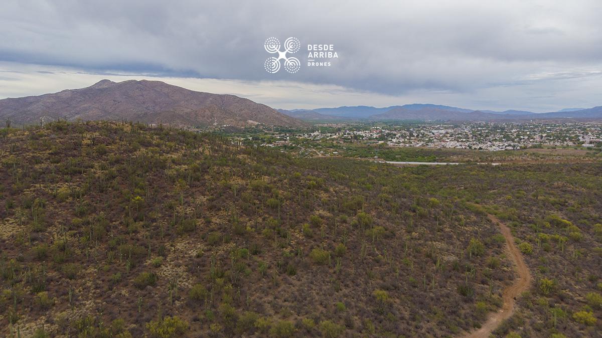 santuario de sahuaros desierto de sonora desde arriba drones